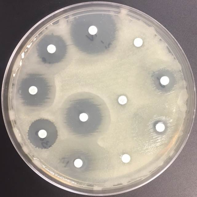 case study pseudomonas aeruginosa